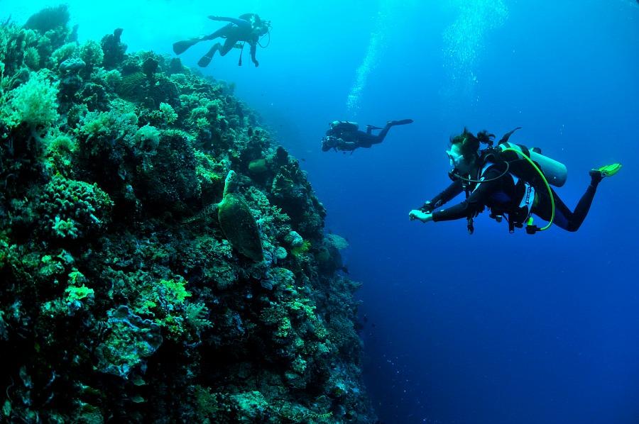 palawan excursions reef