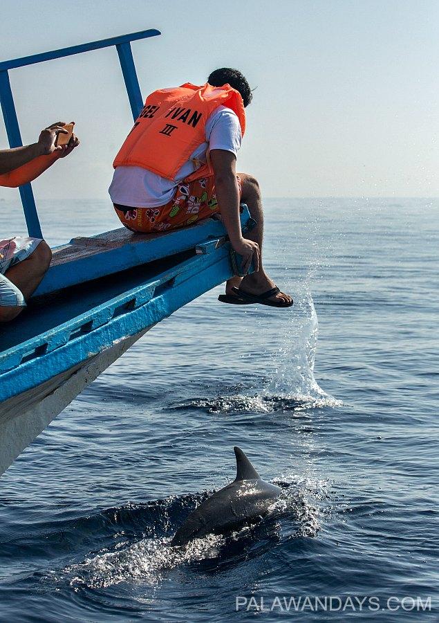12  Dolphin watching tour Puerto Princesa