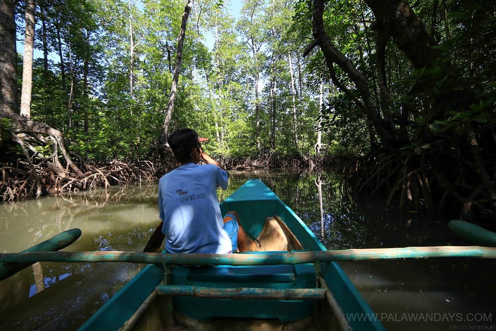 mangrove forest sabang palawan